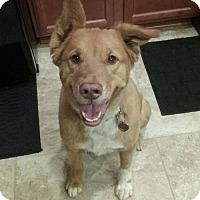 Adopt A Pet :: Khloe - Blacksburg, SC