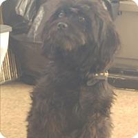 Adopt A Pet :: Ziggy - LAKEWOOD, CA