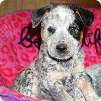 Adopt A Pet :: Arrabelle - Garden City, NY