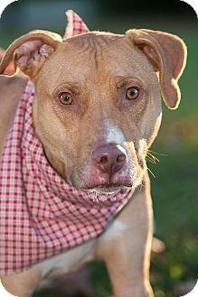 Terrier (Unknown Type, Medium) Mix Dog for adoption in Flint, Michigan - Rocco