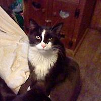 Adopt A Pet :: Stripe - Benton, PA