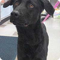 Adopt A Pet :: Mae - Claremore, OK