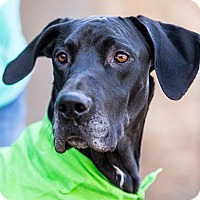 Adopt A Pet :: Thunder - Huntersville, NC