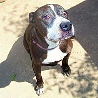 Adopt A Pet :: Jade - Glendale, AZ