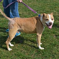 Adopt A Pet :: Regal - Akron, OH