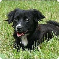 Adopt A Pet :: Alison - Mocksville, NC