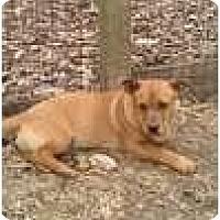 Adopt A Pet :: Manning - Staunton, VA