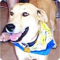 Adopt A Pet :: Victoria - Scottsdale, AZ