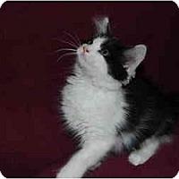 Adopt A Pet :: Pheobe - Modesto, CA