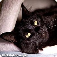 Adopt A Pet :: Emily - Hyde Park, NY