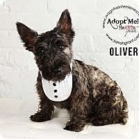 Adopt A Pet :: Oliver-Pending Adoption - Omaha, NE