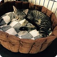 Adopt A Pet :: Greg - Speonk, NY