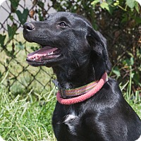 Adopt A Pet :: Mabel - Elmwood Park, NJ