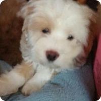 Adopt A Pet :: Galina - Rocky Mount, NC