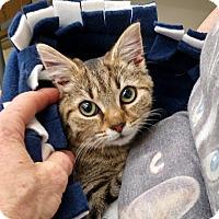 Adopt A Pet :: Libby - Warren, OH