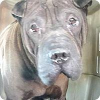 Adopt A Pet :: Murphy - Mira Loma, CA