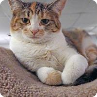 Adopt A Pet :: MEG - Toledo, OH