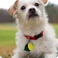 Adopt A Pet :: Patriot - Worcester, MA