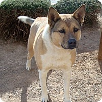 Adopt A Pet :: Alannah - Las Vegas, NV