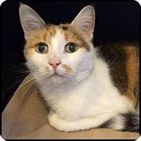 Adopt A Pet :: Rosie - Colorado Springs, CO