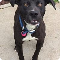 Adopt A Pet :: Buster - Lewisburg, TN