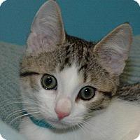 Adopt A Pet :: Tanner - Cincinnati, OH
