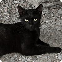 Adopt A Pet :: Ace - Sylvania, GA