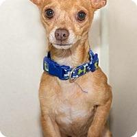 Adopt A Pet :: Hector - Houston, TX