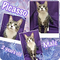 Adopt A Pet :: Picasso - Lexington, NC