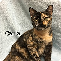 Adopt A Pet :: Carla - Foothill Ranch, CA