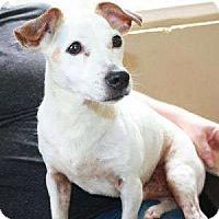 Adopt A Pet :: Hawkeye - Sudbury, MA