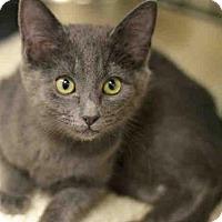 Adopt A Pet :: ODIN - Santa Fe, NM