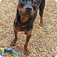 Adopt A Pet :: Lucius - Richmond, VA