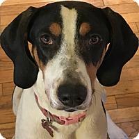 Adopt A Pet :: Phyllis - Grafton, WI