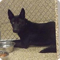 German Shepherd Dog/Husky Mix Dog for adoption in Martinsburg, West Virginia - Lyla