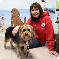 Adopt A Pet :: Maggie II - Elyria, OH