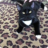 Adopt A Pet :: Jinx - San Jose, CA