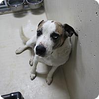 Adopt A Pet :: A36 Abbot - Odessa, TX