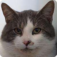 Adopt A Pet :: Possum - Bethesda, MD