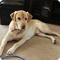 Adopt A Pet :: Eroy - Rochester, MN