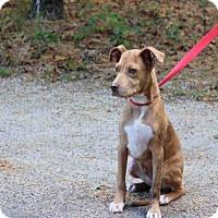 Adopt A Pet :: YODA - Wainscott, NY