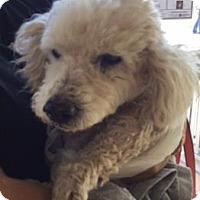 Adopt A Pet :: BOY - San Antonio, TX