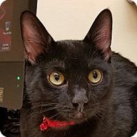 Adopt A Pet :: Baby Cam - Fairfax, VA
