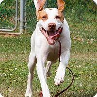 Adopt A Pet :: PA/Rylee - Pittsburgh, PA