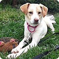 Adopt A Pet :: Clover REDUCED FEE - Staunton, VA