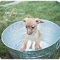 Adopt A Pet :: Sonny Beach - Shawnee Mission, KS