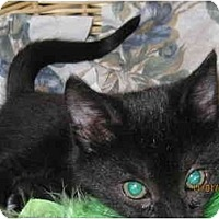 Adopt A Pet :: Shadow - Catasauqua, PA