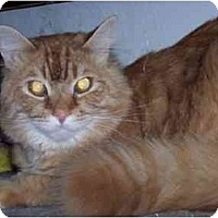 Adopt A Pet :: Klaussen - Delmont, PA