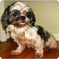 Adopt A Pet :: Cher - Mooy, AL