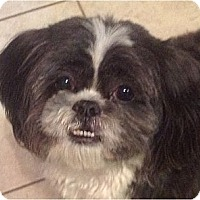 Adopt A Pet :: Lenny-NC - Mays Landing, NJ